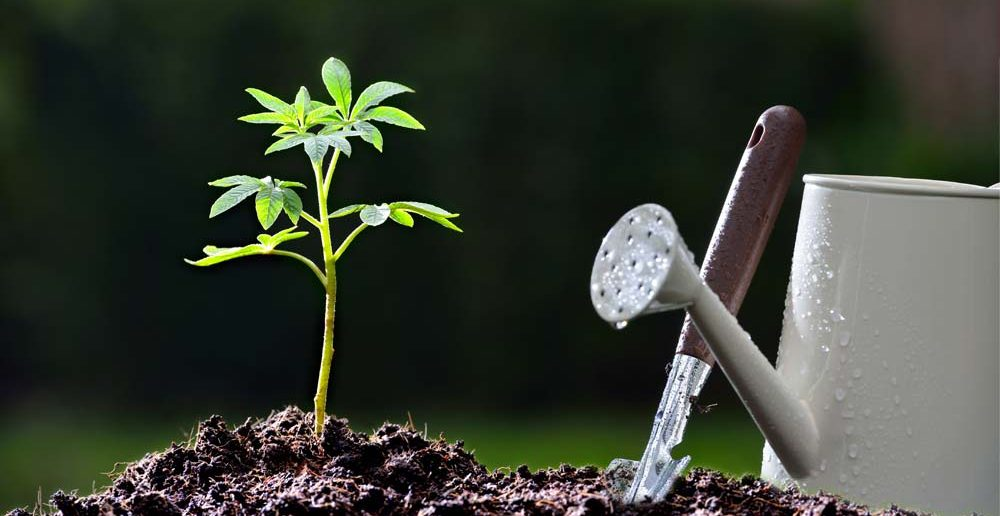 1. Taufgeschenke-Idee für Sie: der Baum der Ewigkeit - wird in der Jugend gepflanzt. Durch Sie.