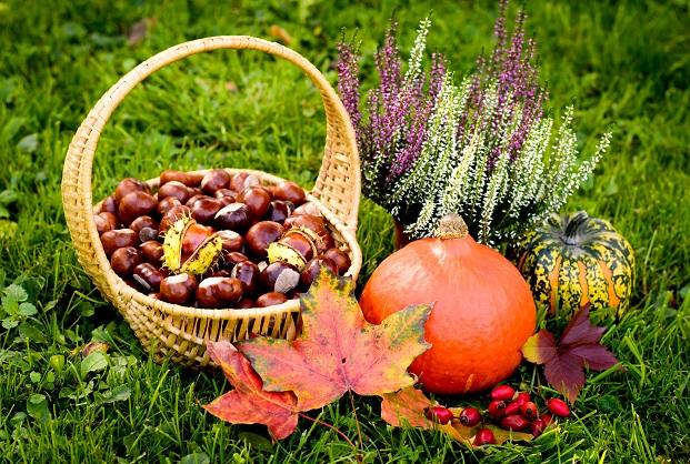 Gerade der Herbst ist die ideale Jahreszeit, um mit Kindern zu basteln.
