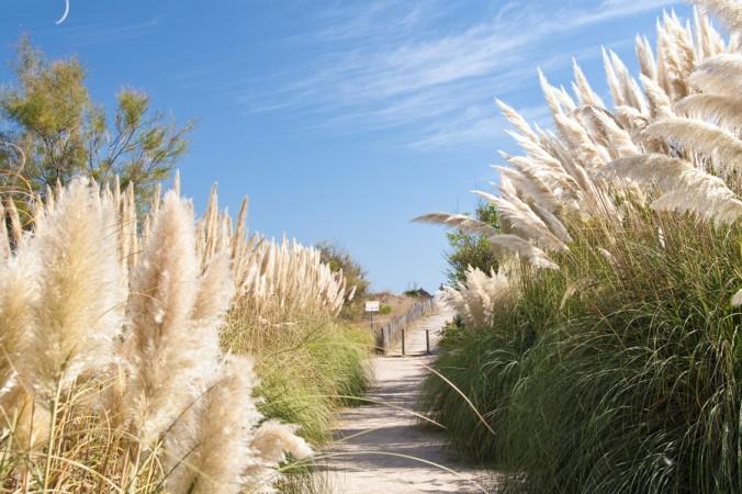 Wunderschöne Wege laden zum Spazieren ein. Ein tiefer Atemzug und die Entspannung kann kommen. (#2)