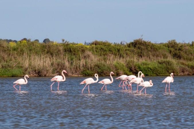 Vogelkunde im Museum La Halle des Oiseaux oder lieber Flamingos live in der Camargue - hier ist beides möglich! (#2)