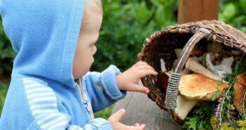 Pilzvergiftung Kinder: Richtig reagieren und handeln