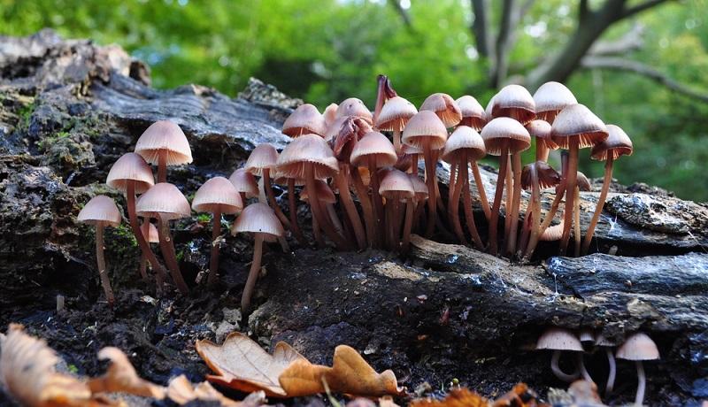 """Dass man sogenannte Magic Mushrooms (auf Deutsch: """"magische Pilze"""") erwischt hat, merkt man an abnormalen Bluthochdruck, Herzrasen und erhöhter Temperatur. (#03)"""