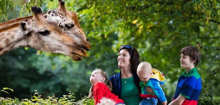 Giraffen: Kuriose Lieblinge der Kinder und tolles Motiv für dekorative Bilder
