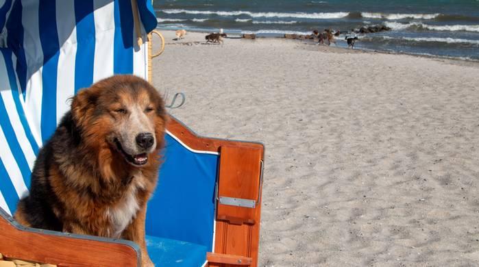 Die Strände an der Ostsee sind wie geschaffen für unsere Hunde. (Foto: shutterstock - Sabine Schoenfeld)